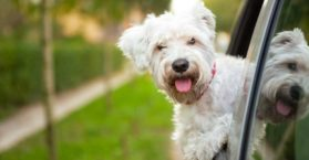 Frases de bom dia cachorro feliz