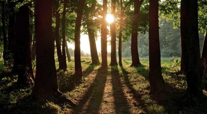 56 frases de boa tarde para usar diariamente com quem você quer bem