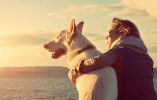 Legenda para foto com cachorro: 60 ideias para celebrar o melhor amigo do homem