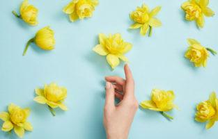 60 frases de primavera para celebrar a renovação da natureza