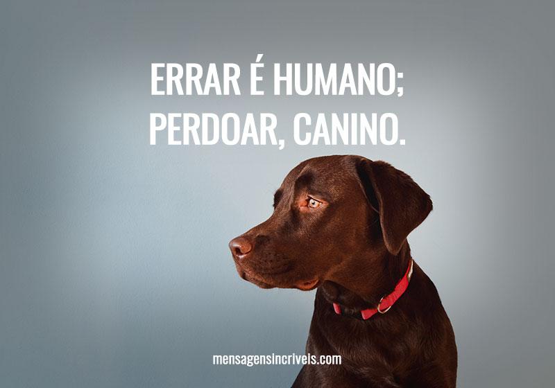 Errar é humano; perdoar, canino.
