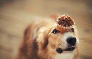45 frases de cachorro para compartilhar o amor pelo seu mascote