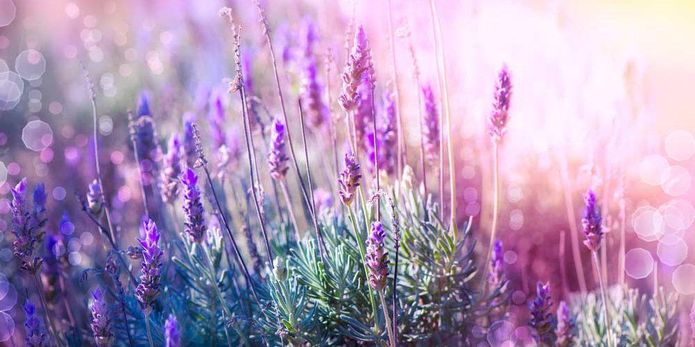 41 frases de beleza que vão te fazer admirar todas as coisas belas da vida