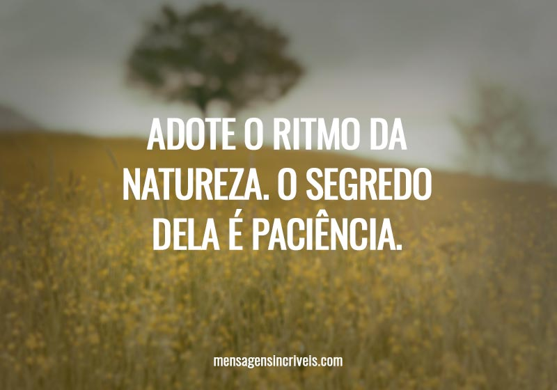 Adote o ritmo da natureza. O segredo dela é paciência.