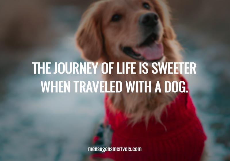 The journey of life is sweeter when traveled with a dog.