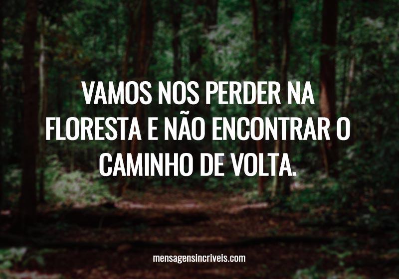 Vamos nos perder na floresta e não encontrar o caminho de volta.