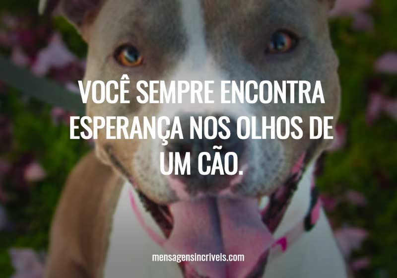 Você sempre encontra esperança nos olhos de um cão.