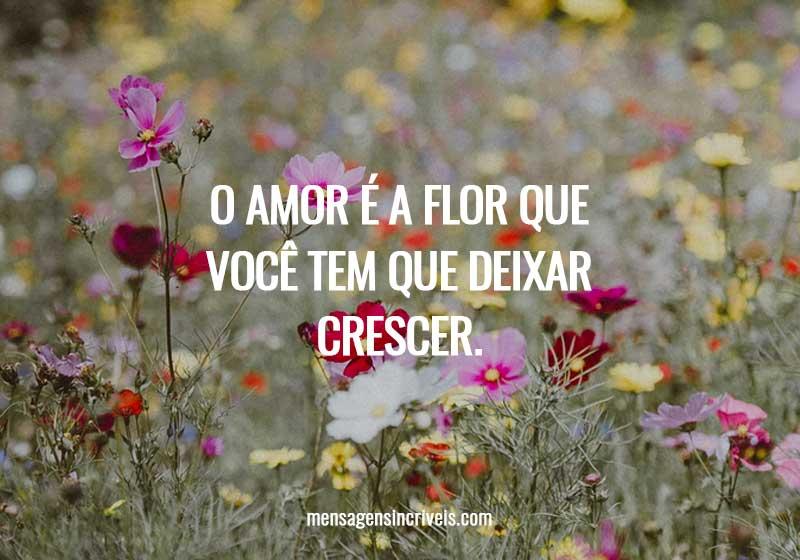 O amor é a flor que você tem que deixar crescer.